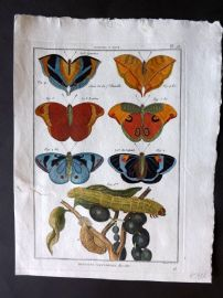 Diderot C1790 Antique Hand Col Print. Butterflies 26